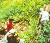malakológus1981